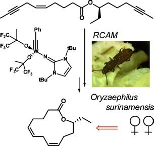 Identification and Synthesis of Macrolide Pheromones of